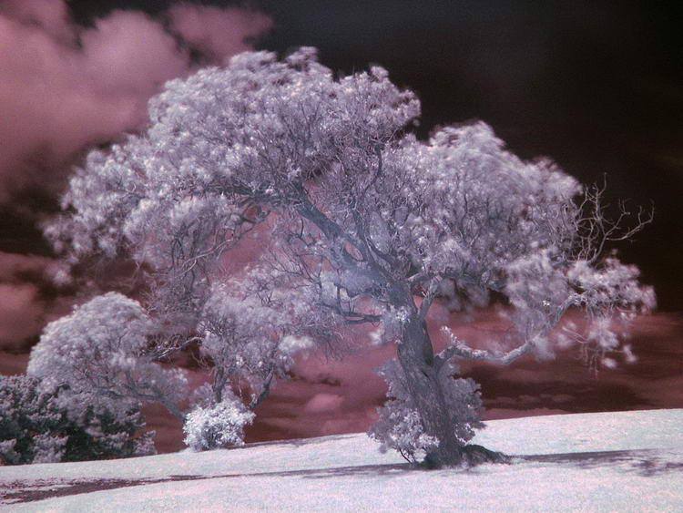 1200px-Tree_example_IR