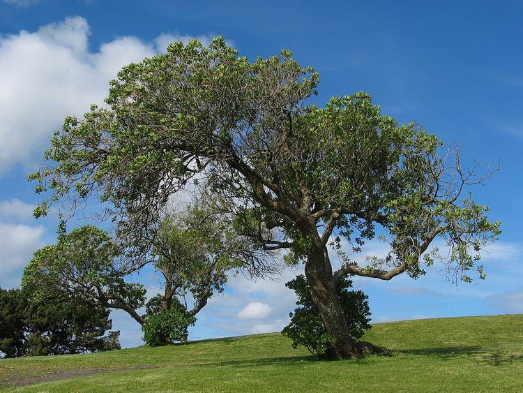 1200px-Tree_example_VIS
